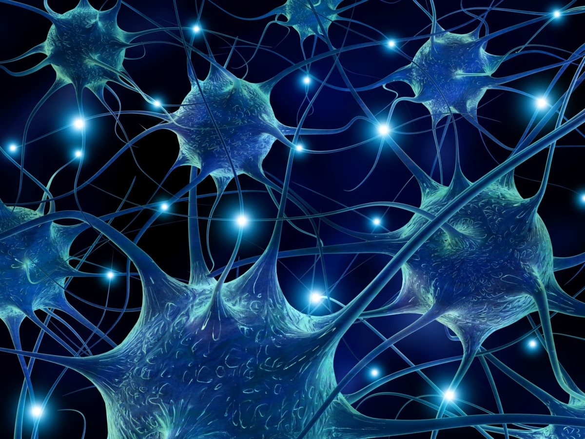 physics of neurons Thus, qmam advances traditional physics to the new physics articulated by the grand unified (gut)5, its the length (number of neurons) of a branch of activated linear chain is proportional to the.